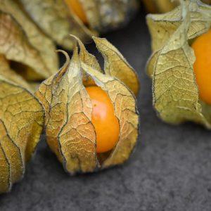 Ananaskörsbär (kapkrusbär)