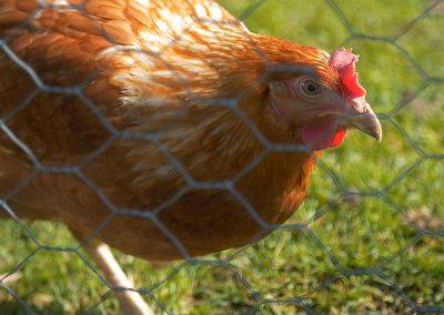 Kanaa kiinnostaa kamera
