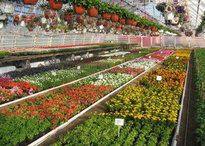 Kasvihuoneen kukkaloistoa - huumaavan tuoksun tuntee vain paikan päällä
