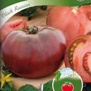"""Tomaatti """"Black Russian"""""""