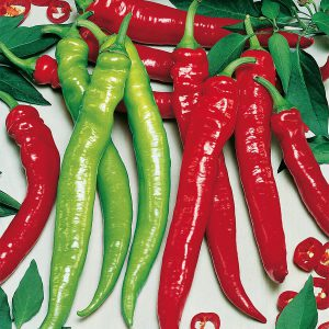 "Chilipaprika ""Lyric Hot"""