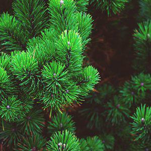 Havu- ja lehtipuut