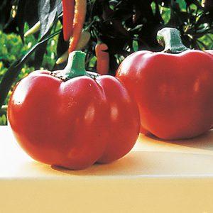 "Tomaattipaprika ""Pritavit"""